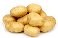 Удача, семенной картофель.