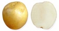 Ладожский, семенной картофель