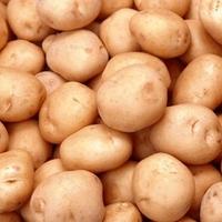 Лига, семенной картофель