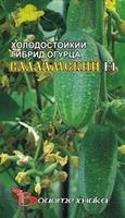 Космея Петрушка листоваяИтальянский гигант