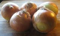 Шэкспир, озимый лук севок