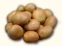 Луговской, семенной картофель