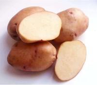 Жуковский, семенной картофель