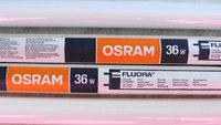 Лампа Osram Fluora для рассады