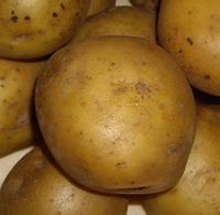 Тимо, семенной картофель